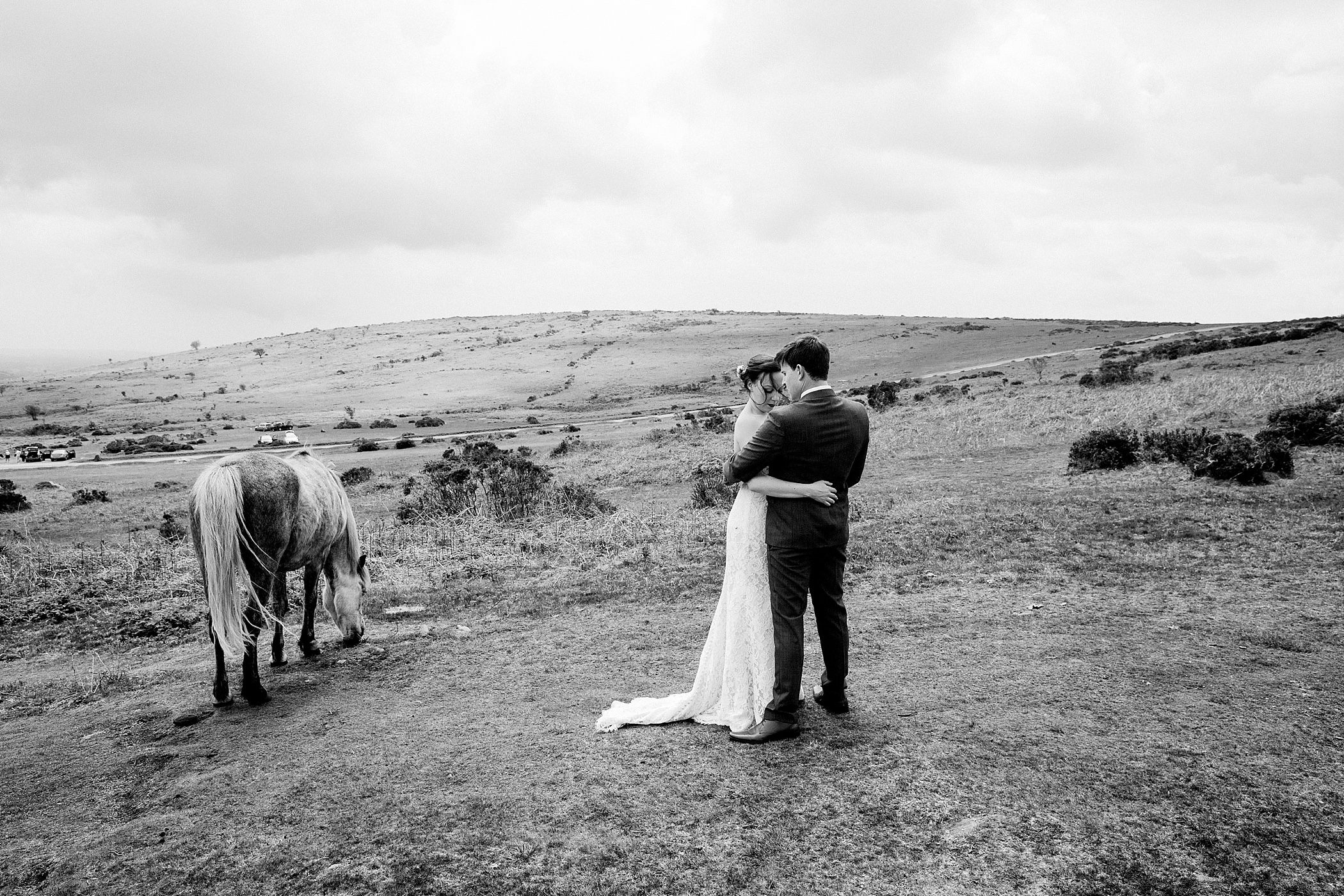 Dartmoor pony with bride and groom