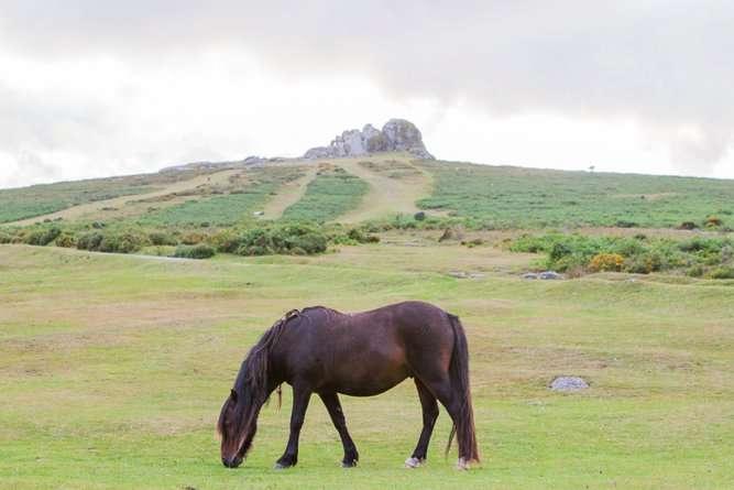 Dartmoor-Engagement-Photography